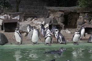 zoo pinguin