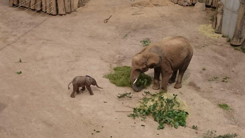 Du Bist Mit Dem Zoo