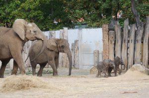 elefanten zoo