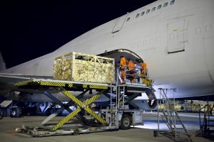 Large animals transported from Leipzig_Halle Airport