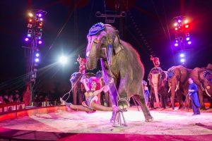 Jana & James, Elefanten; Circus Krone Premiere, 02.04.15 foto: Oliver Bodmer
